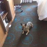 Photo for Walker Needed For 1 Dog In Titusville