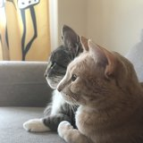 Photo for Looking For A Pet Sitter For 2 Cats In New York