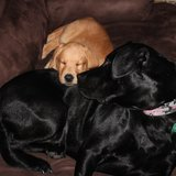 Photo for Sitter Needed For 2 Dogs In Pensacola