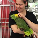 Photo for Groomer Needed For Parrot In Brooklyn