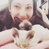 Photo for Cat Sitter For Two Adorable Hypoallergenic Kittens!