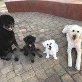 Photo for Sitter Needed For 4 Dogs, 1 Cat In Phoenix