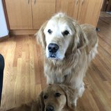 Photo for Looking For A Pet Sitter For 2 Dogs In Vashon