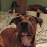 Photo for Walker Needed For 1 Large Dog In Saint Augustine, Downtown Lincolnville