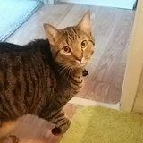 Photo for Sitter Needed For 1 Cat In Arlington Heights