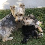 Photo for Looking For A Pet Sitter For 2 Dogs In Oceanside