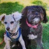 Photo for Pet Sitter/ Walker