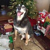 Photo for Dog Companion