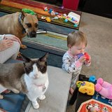 Photo for Looking For Part-time Babysitter For 1yr Old, Must Be Very Comfortable With Pets