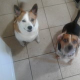 Photo for Looking For A Pet Sitter For 2 Dogs In Orlando