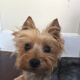 Photo for Looking For A Pet Sitter For 4 Dogs In Secaucus