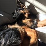 Photo for Sitter Needed For 1 Large Dog In Hollywood