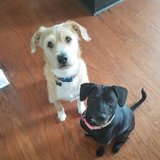 Photo for Daily Sitter Needed For 2 Dogs, 2 Cats In Gilbert