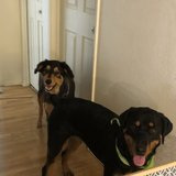 Photo for Looking For A Pet Sitter For In Phoenix