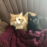 Photo for Holiday Cat Sitter - 2 Cats