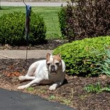Photo for Looking For A Pet Sitter For 1 Dog In Rochester