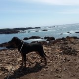 Photo for Looking For A Pet Sitter For 1 Dog In San Rafael