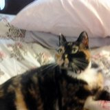 Photo for Looking For A Pet Sitter For 1 Cat In Walnut Creek