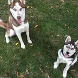 Photo for Sitter Needed For 2 Dogs In East Rochester