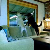 Photo for Light Yard Work, Housekeeping, Dog Walking/Cleanup, DIY Handyman Apprentice