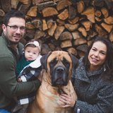 Photo for Dog Walker For A Year Old, 160lb English Mastiff Walker