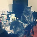 Photo for Sitter Needed For 2 Cats In Princeton