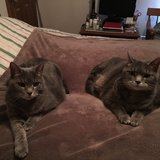 Photo for Looking For A Pet Sitter For 1 Cat In Lancaster