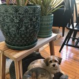Photo for Sitter Needed For 2 Dogs In Providence