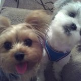 Photo for Looking For A Pet Sitter For 2 Dogs In Palm Beach Gardens