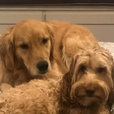 Photo for Weekend In-home Pet Sitter
