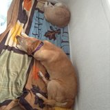 Photo for Looking For A Pet Sitter For 1 Dog, 1 Cat In Council Bluffs