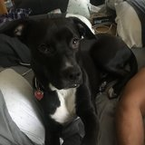 Photo for Boarding Needed For 1 Dog In North Andover