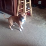 Photo for Looking For A Pet Sitter For 1 Dog, 2 Cats In Dallas