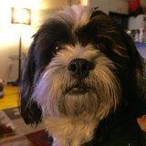 Photo for Walker Needed For 1 Dog In Flower Mound