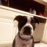 Photo for Sitter Needed For 1 Dog In Valdosta
