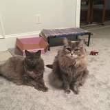 Photo for Sitter Needed For 2 Cats In Grovetown