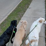 Photo for Occasional Overnight Pet Sitter (for 3 Dogs) Sitter
