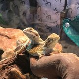 Photo for Pet Sitter Comfortable With Reptiles