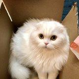 Photo for Cat Caregiver