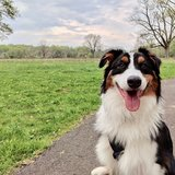 Photo for Sitter Needed For Dog In Doylestown