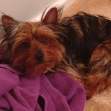 Photo for Looking For A Pet Sitter For 1 Dog In El Paso