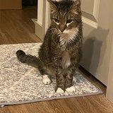 Photo for Diabetic Cat Care