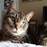 Photo for Trustworthly & Honest Senior Cat Sitter