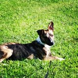 Photo for Sitter Needed For 1 Dog In Lexington