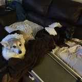 Photo for PET-SITTER, 3-4 DAYS/WEEK (MONDAY-FRIDAY 9am-5pm)