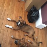 Photo for Walker Needed For 2 Puppies In Springfield