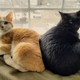 Photo for Sitter Needed For 2 Cats