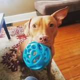 Photo for Looking For A Pet Sitter For 1 Dog In Chambersburg