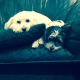 Photo for Sitter Needed For 3 Dogs In La Porte