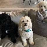Photo for Boarding Needed For 3 Small Dogs In/Near Tarzana